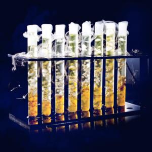 Молекулярный бар на встречу гостей